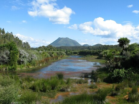 Wildlands-Norske Skog wetland restoration project, Kawerau